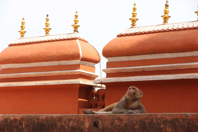хава махал, индия, раджастан, джайпур