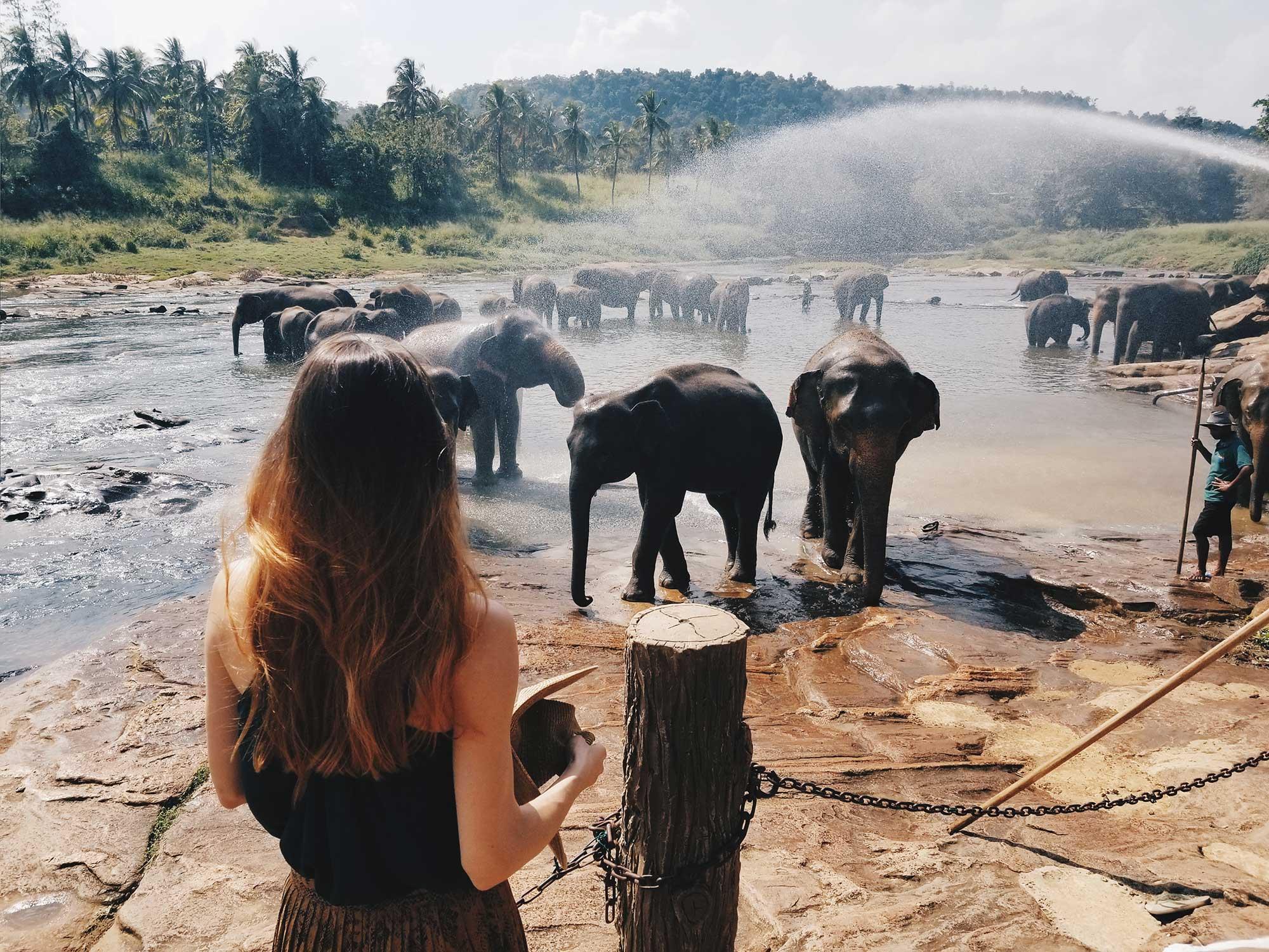 сиропиталище за слонове пинавала