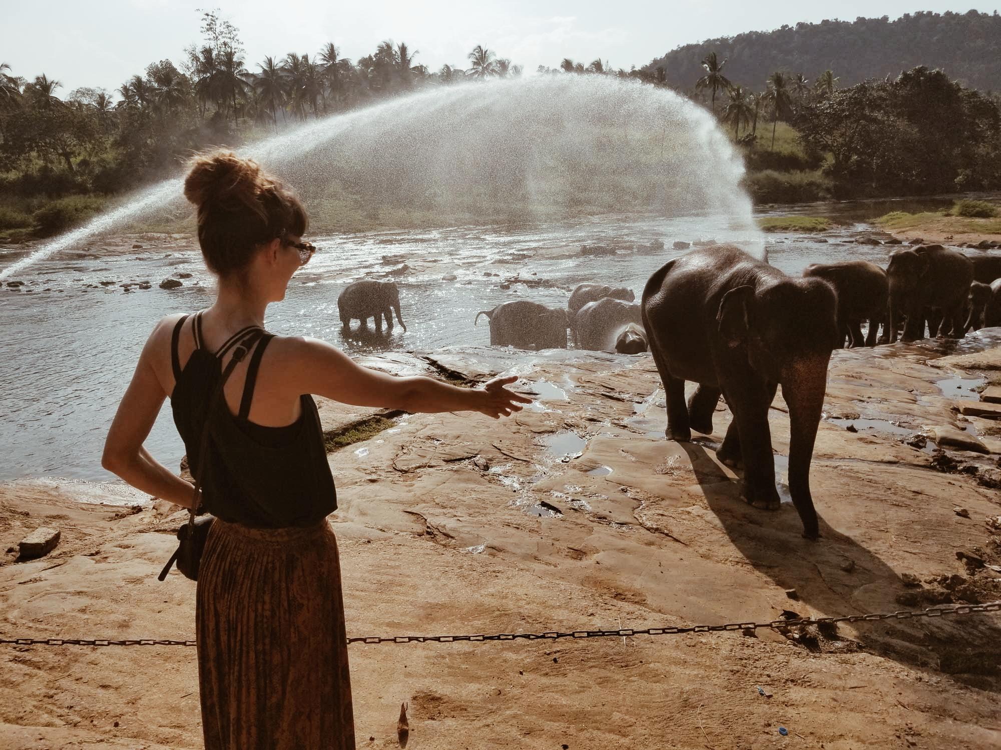Сиропиталището за слончета Пиннавала
